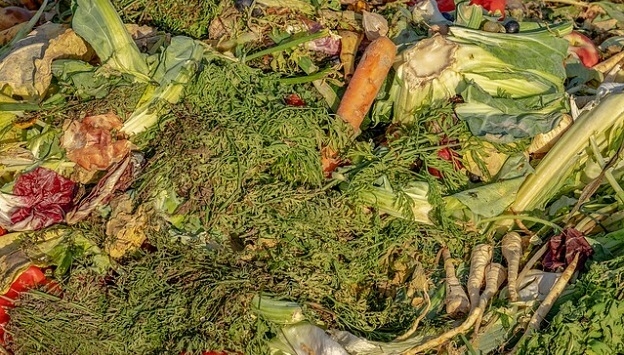 How to start your own compost bin