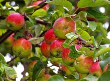Tips for starting your own orchard