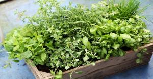How to grow herbs inside