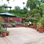 The Water Conservation Garden