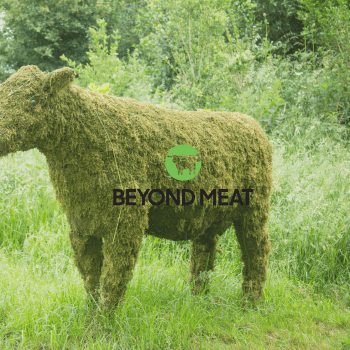 Is beyond meat sustainable?