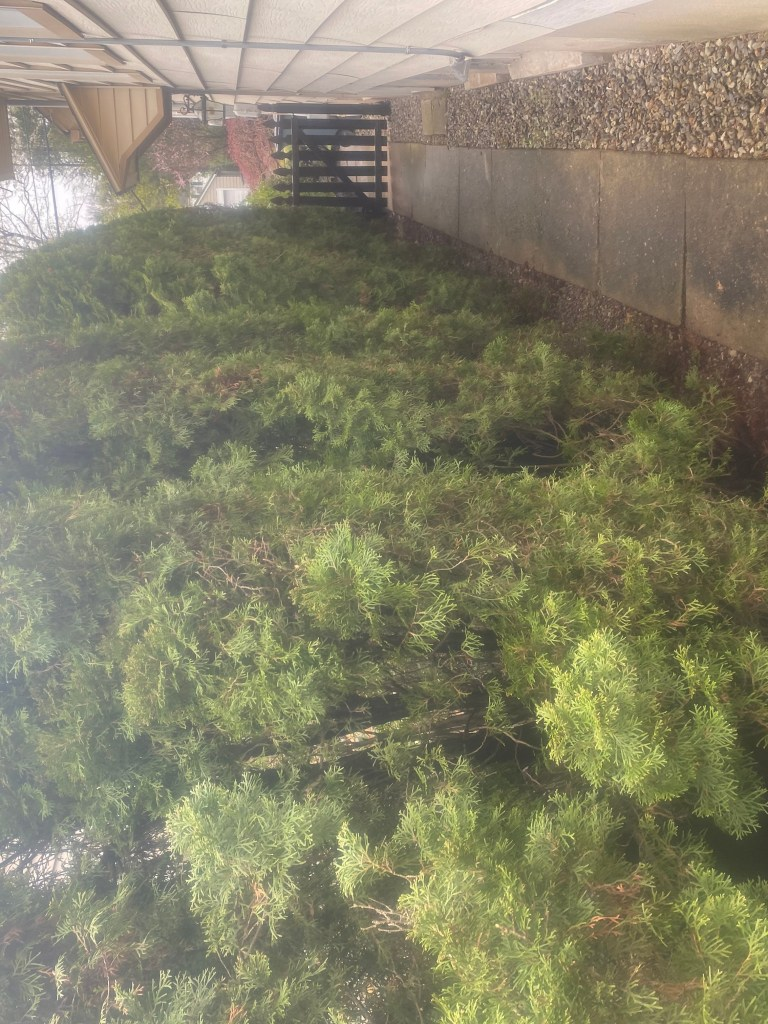 sustainable landscaping row of shrubs