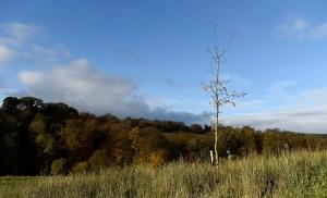 WoodlandTrustyoung-saplings