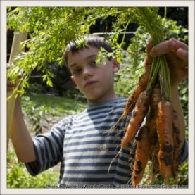 A boy holding out a bunch of orange carrots, freshly harvested, still with the dirt and leaves