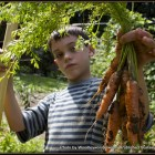 A boy holding out a bunch of freshly harvested carrots