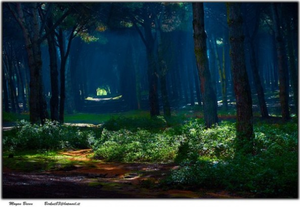 Forest of fairies: light coming from the sky creates an ethereal feel to the forest