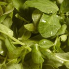 close up of microgreen pea shoots