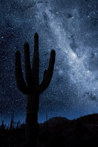 night-sky-saguaro