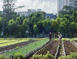 An Urban Farm (sans livestock) inhabitat.com