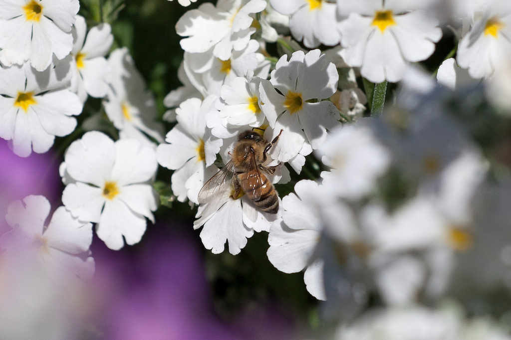Bees in the City: Is Your Urban Apiary Illegal?