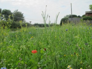 Open Spaces Allow Bees to Thrive pasturetoprofit.blogspot.com