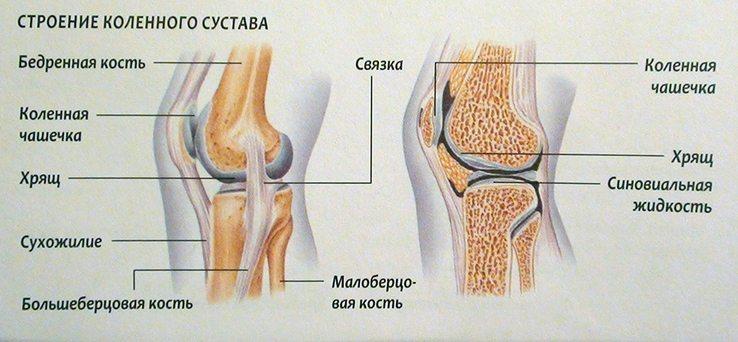 Cấu trúc đầu gối