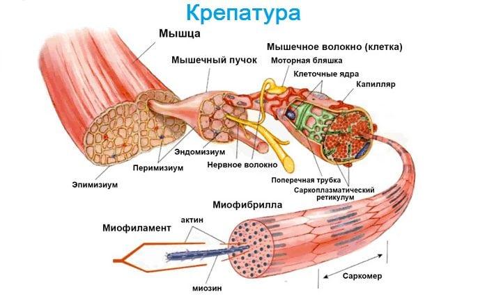 cum să înțeleg articulațiile sau mușchii răniți este artrita pe degetele tratate