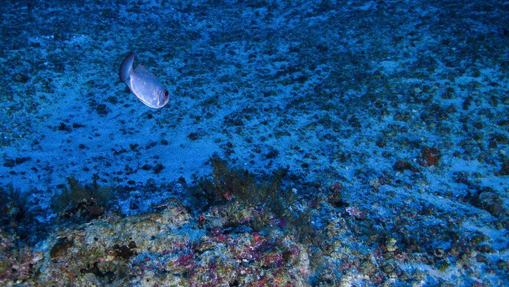 Resultado de imagem para bp e total querem explorar petroleo na área dos corais da amazonia