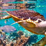 turtle,biodiversity