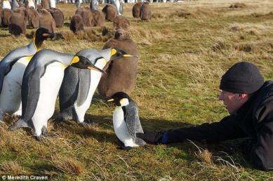 mumbles-pingüinos