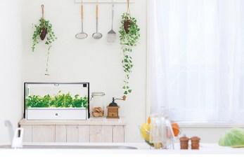 水耕栽培(ダスキン)は失敗しない?始め方や価格・野菜の種類など