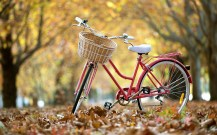 Street-bike-autumn-leaves_1280x800