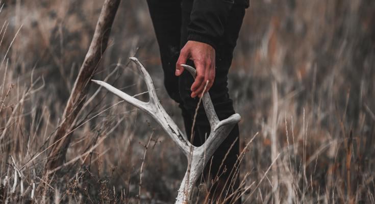 Utah shed hunting