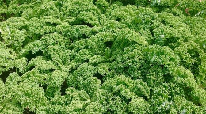 Salaatti nro 35 – Maanantain tarmojuoma lehtikaalista