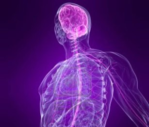 cranio-sacraal-therapie-body