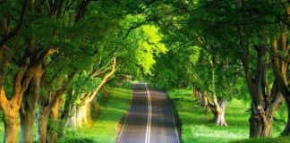 Short Essay On Importance Of Trees in Hindi Language ped lagao paryavaran bachao jeevan desh