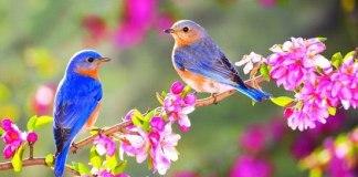 बसंत ऋतु पर कविताएँ - Small Poem On Basant Ritu Hindi Language