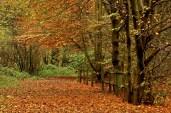 Colwick Park, Nottingham
