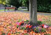 Farndon Green, Nottingham