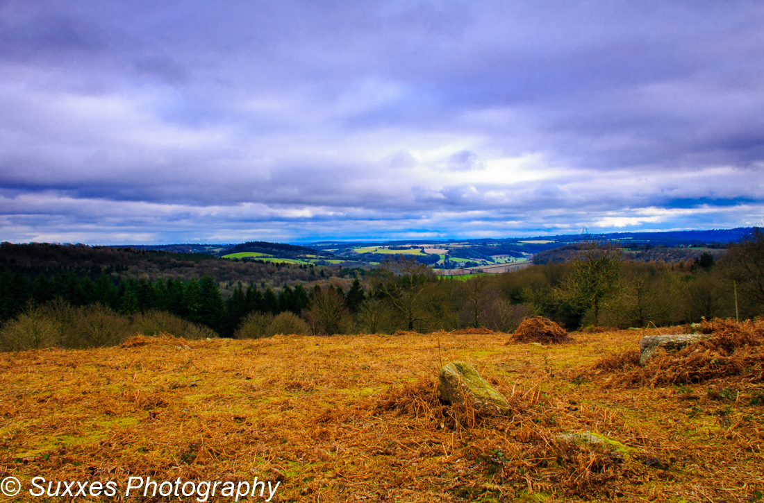 heath Forest of Dean