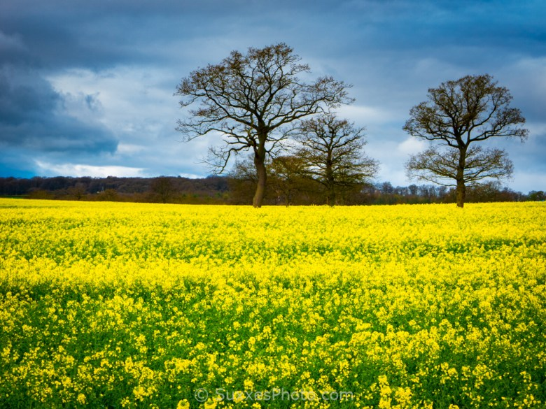 rapeseed westwood droitwich spa