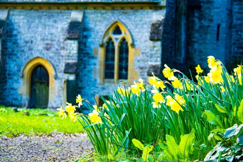 hasfield church daffodils