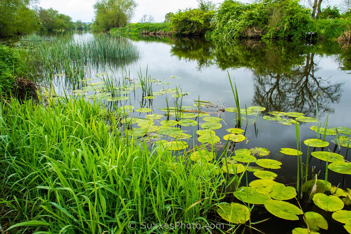 river avon lilies reeds