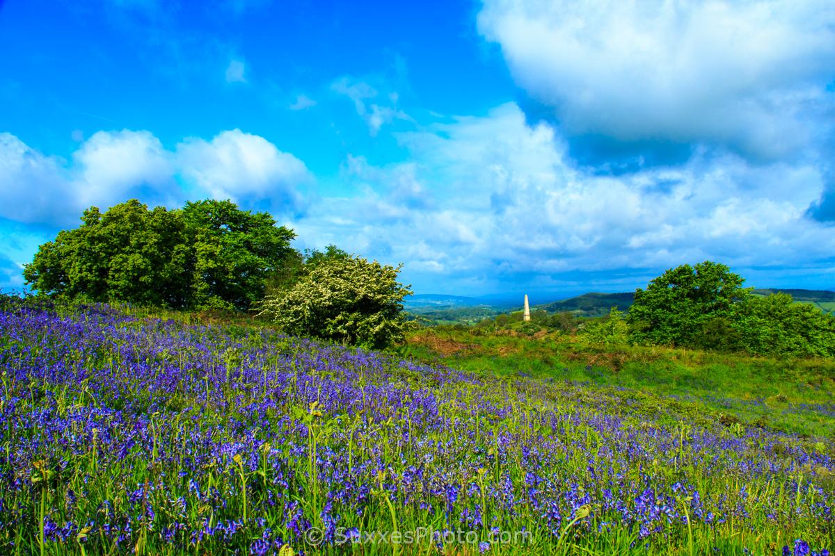 obelisk south malverns bluebells