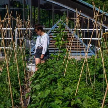 formation analyser un site les principes de base de conception en pérmaculture