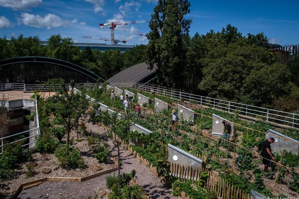 une ferme sur toiture au coeur du 15 ème arrondissement à Paris