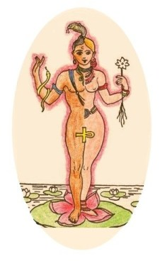 androgyne-lotus