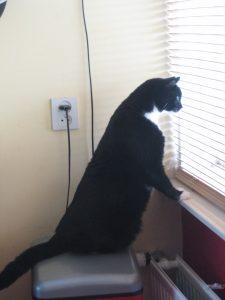 Joop als buurtwacht