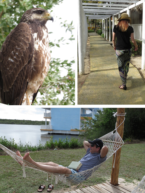 cayococo vacation 2015 photos suzanne carillo
