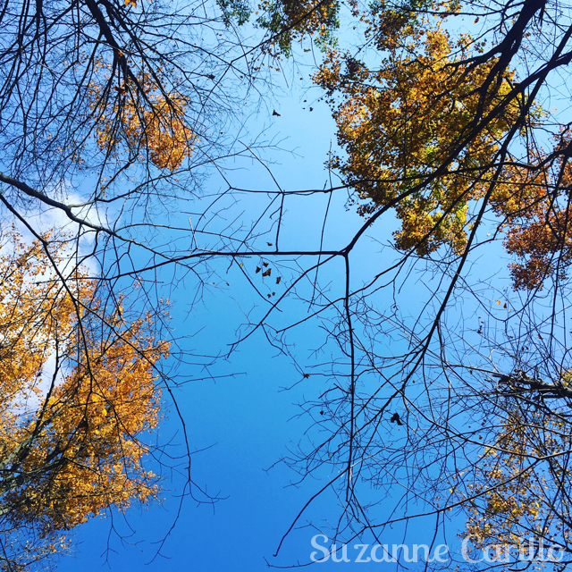 blue skies ahead suzanne carillo