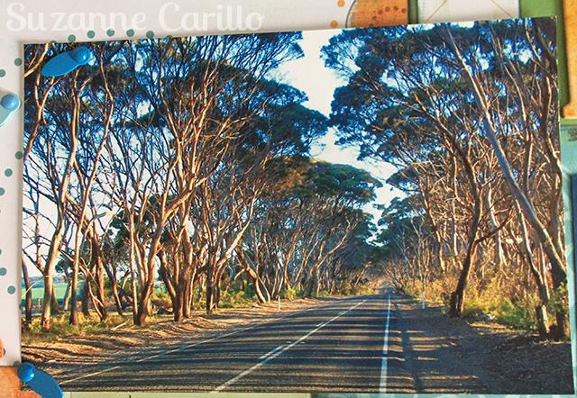 kangaroo island suzanne carillo