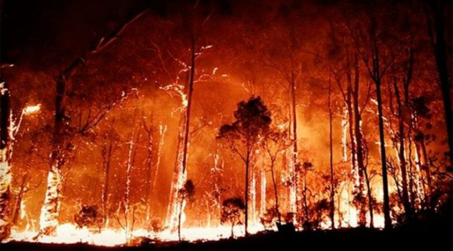 what have we done? Environmental emergency wild fires burning in Australia.