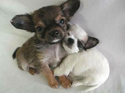 Two puppies hugging