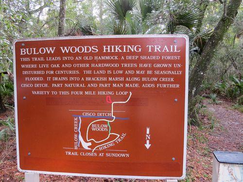Bulow woods trail