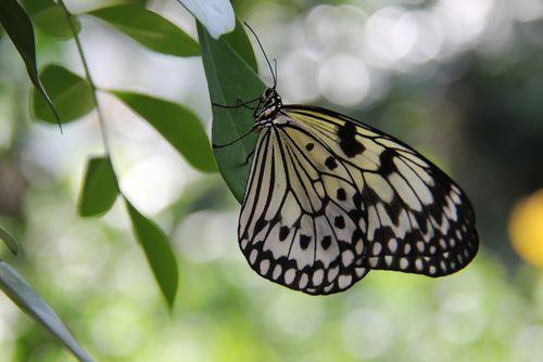 Butterfly closeup