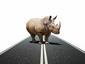 huge rhino on asphalt way