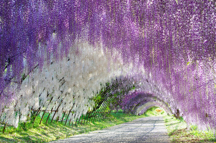 Flower arch 花のアーチ