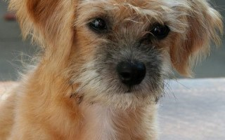 Friday Five: 5 Ways To Know For Sure You're A Dog Lover