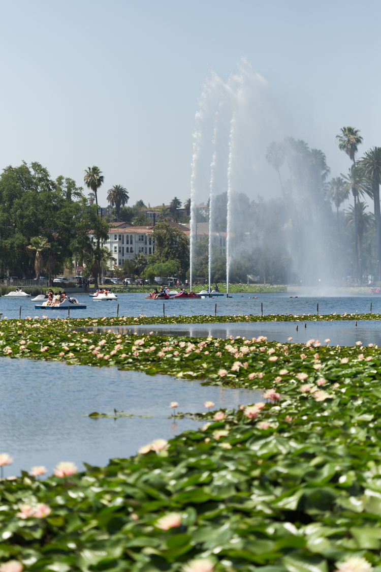 Flowers leading to Echo Park Lake fountain
