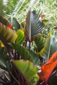 Kauai Hindu Monastery colorful leaves